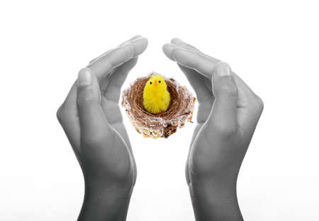 hatched: Easter Chick in Nest held up by two hands