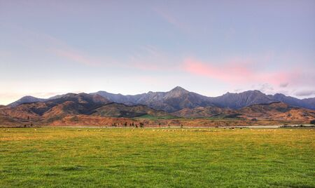 Sheep Grazing at Sunrise in New Zealand photo