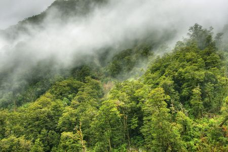 Fog covered mountains in a New Zealand rainforest landscape photo