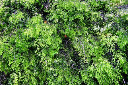 Green rainforest background in New Zealand wilderness photo