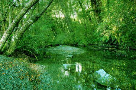Green rainforest background in New Zealand wilderness