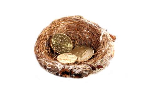 Money in nest, gold dollar coins photo