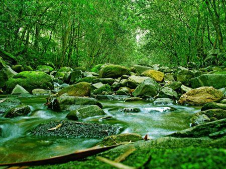 australie landschap: Groene Woud en de rivier in Australië