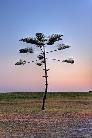 Pine christmas tree silhouette image Stock Photo - 5022786