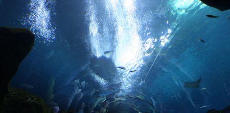 sharks and fish in the Atlanta aquarium photo