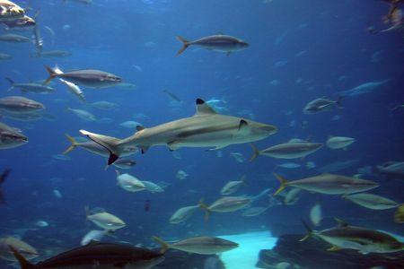 Haie und Fische im Aquarium Atlanta