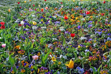 garden tulips during a flower festival Stock Photo - 5637423