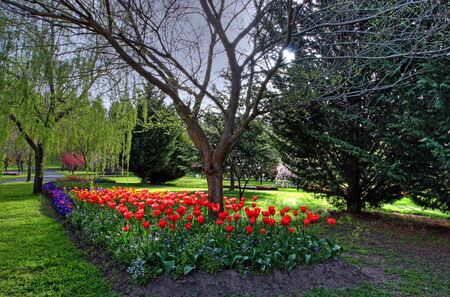 tulip garden during a flower festival