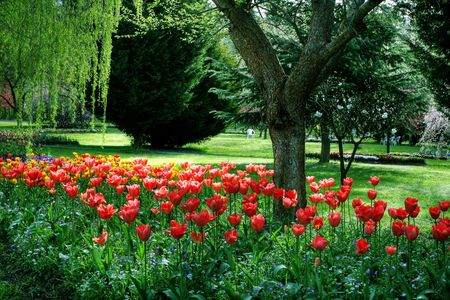Colorful garden in springtime with trees and flowers Stock Photo - 5791042