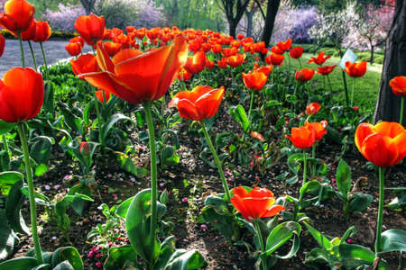 Colorful garden in springtime with trees and flowers Stock Photo - 5791009