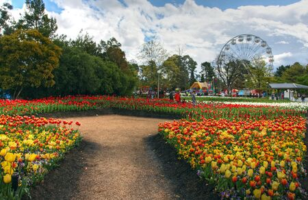 floriade: flower festival in Canberra with tulip gardens in full bloom