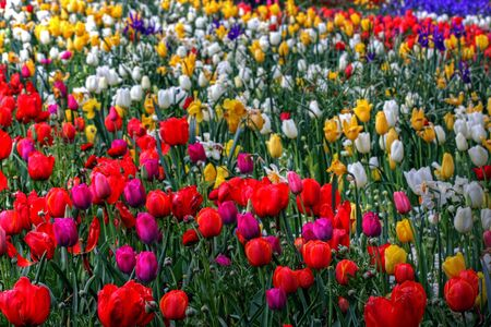 Colorful park in springtime with trees and flowers Stock Photo - 5791006