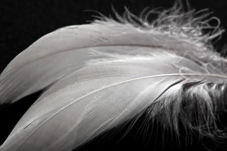 white feather: piuma Archivio Fotografico