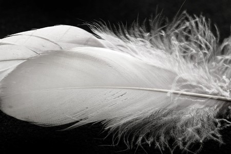 white feathers against black background