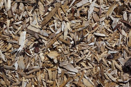 pine timber wood chip background texture Stock Photo - 7174026