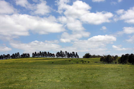 green meadow Stock Photo - 7180325