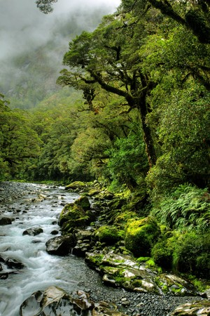 lush rainforest and river landscape in new zealand photo