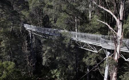 wooden metre: Otway Fly, Tree Top Walk