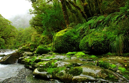 lush rainforest and river landscape in new zealand Stock Photo