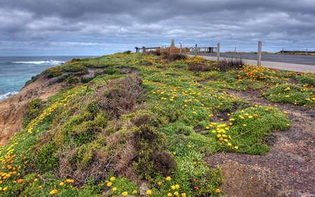 orange flowers along an ocean drive photo