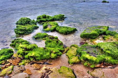 rock covered in green algae landscape photo