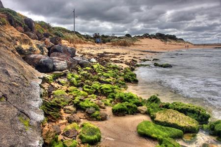 algas verdes: Rock cubiertos en el paisaje de algas verdes  Foto de archivo