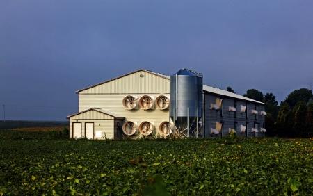 monella: la producci�n en masa moderna avicultura arrojar  Foto de archivo