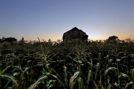 rural homestead in the farm country Stock Photo - 7979416