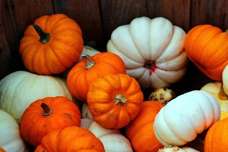 bunch of pumpkins for sale before Halloween  photo
