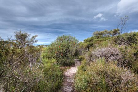 shurb: australian banksia landscape Stock Photo