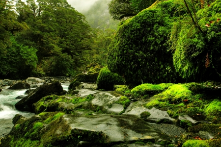 tropical creek, flowing with glacier water Stock Photo