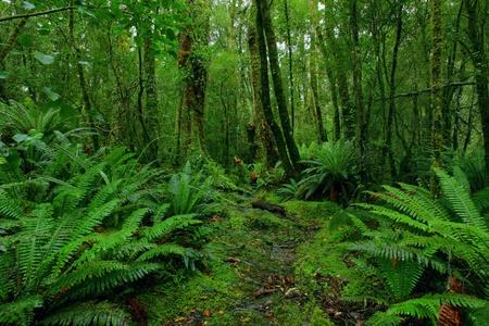 foresta: percorso di lussureggiante foresta pluviale Archivio Fotografico