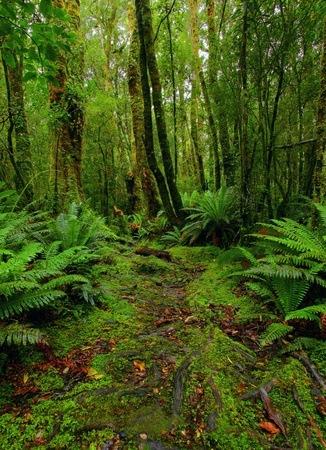lush rainforest path photo