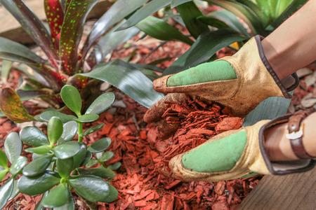 wood chip: Mulching garden beds with red cedar wood chip mulch