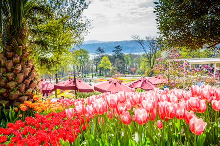 Traditional Tulip Festival in Emirgan Park, a historical urban park located in Sariyer district.Tourists and locals visit and spend time.Istanbul,Turkey Stock Photo
