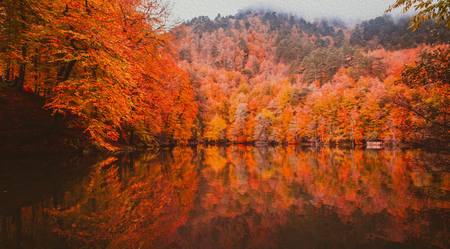 Soft view of autumn landscape, dry trees, golden sky, tree reflected in lake.Digital structure of painting.Oil painting effect filter applied.