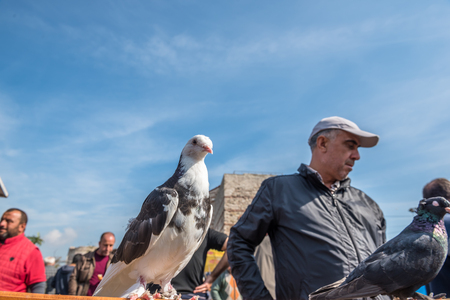 Unidentified man sells live pigeons kept at cage at Pigeon Bazaar in Istanbul,Turkey,15 October,2017 Editorial