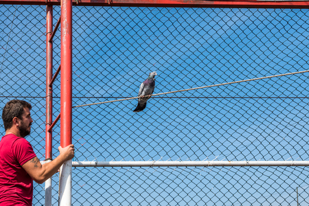 Unidentified man trying to catch escaped pigeon at wire netting in Pigeon Bazaar,Istanbul,Turkey-15 October,2017
