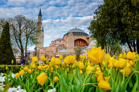 Traditional tulip Festival in Sultanahmet Square with view of Hagia Sophia,Greek orthodox Christian patriarchal basilica (church) on background and colorful tulips on foreground.Istanbul,Turkey.04 April,2017 Editorial
