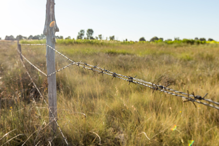 A barbed wire fence with wooden post with meadow on background in the countryside