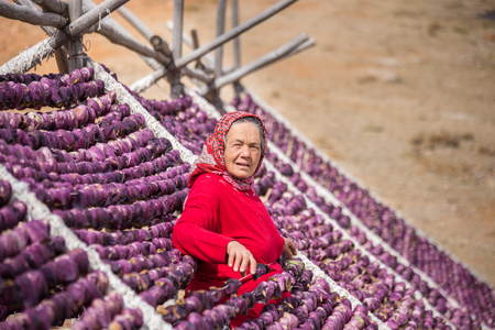 Unidentified woman hangs eggplants for drying process in the sun,Gaziantep,Turkey.03 September 2016 Editorial
