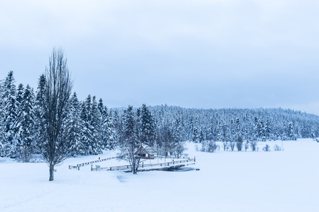 View of Winter frozen lake with pine forest at a cloudy dull day