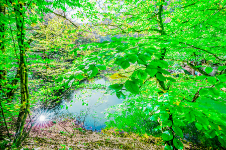 Scenery of beautiful green nature in clear day over surface of lake. Trees are reflected in water. Natural landscape perfect wild nature