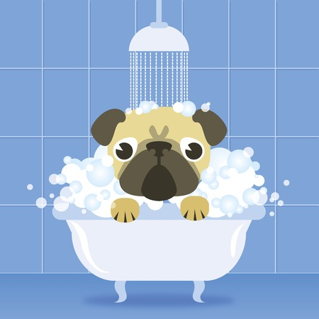 pug dog: Modern vector illustration and stylish design element