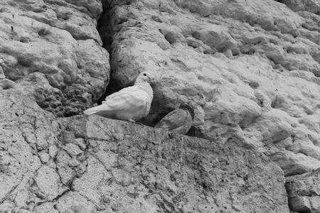 western wall: Bird in the Western Wall Stock Photo
