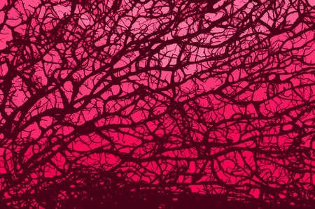 retro branch pink background Stock Photo - 950049