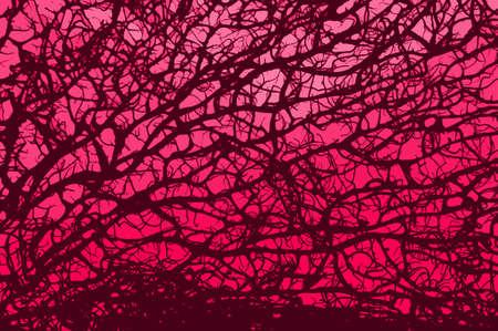retro branch pink background Stock Photo - 950049