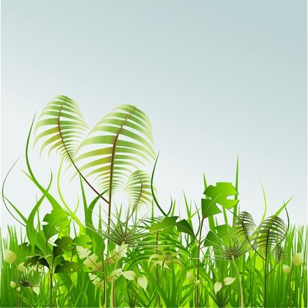 rainforest: Beautiful landscape