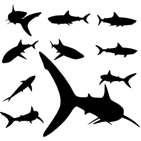 pez martillo: conjunto de silueta de tibur�n de vectores
