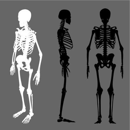 scheletro umano: scheletro silhouette vettore serie